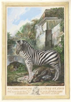 Luis Paret y Alcázar: Una cebra. 1774. Museo del Prado