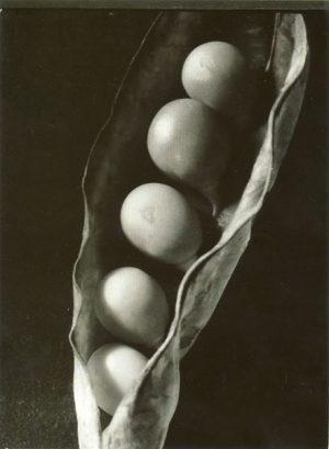 Emili Godes. Pèsols, c. 1930