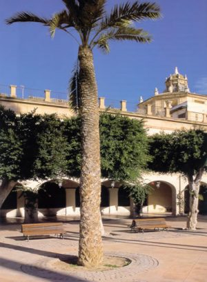 Plazas de España: Almería. Las palmeras que se levantan en la parte central de la Plaza Mayor de Almería rivalizan en altura con los edificios que la configuran.