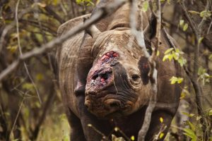 Save' Valley Conservancy, Zimbabwe