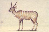 Fonelas. Antilope