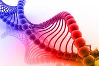 Principios de genética