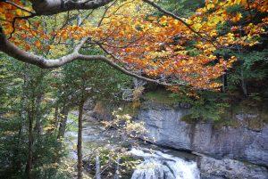 Otoños pasados; otoños futuros