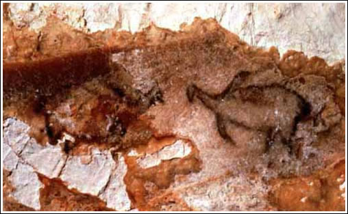 La gruta Cosquer. Animales marinos