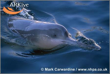 Delfines en peligro