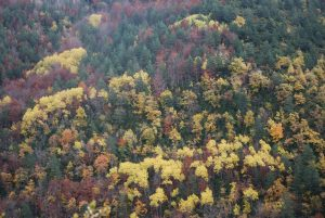 Ainielle: la lluvia amarilla. Entre Bergusa y Ainielle