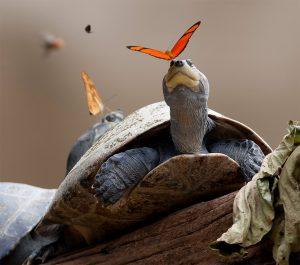 Lágrimas de tortuga y mariposas