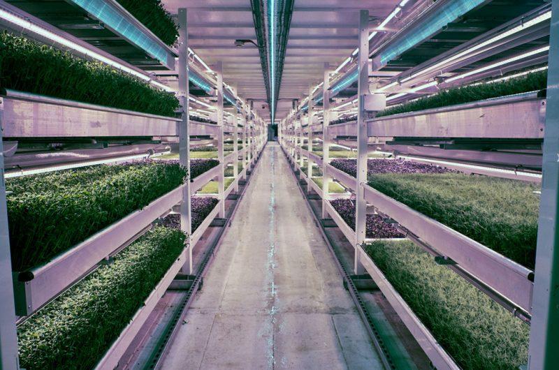 La granja hidropónica subterránea más grande del mundo