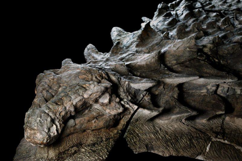 La Piedra de Rosetta de los dinosaurios