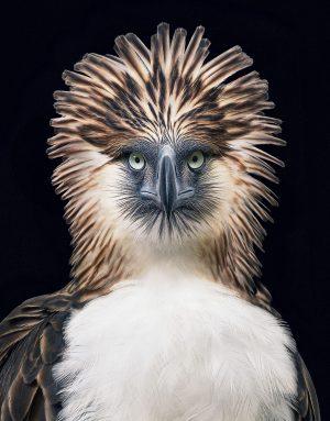 Águila Monera