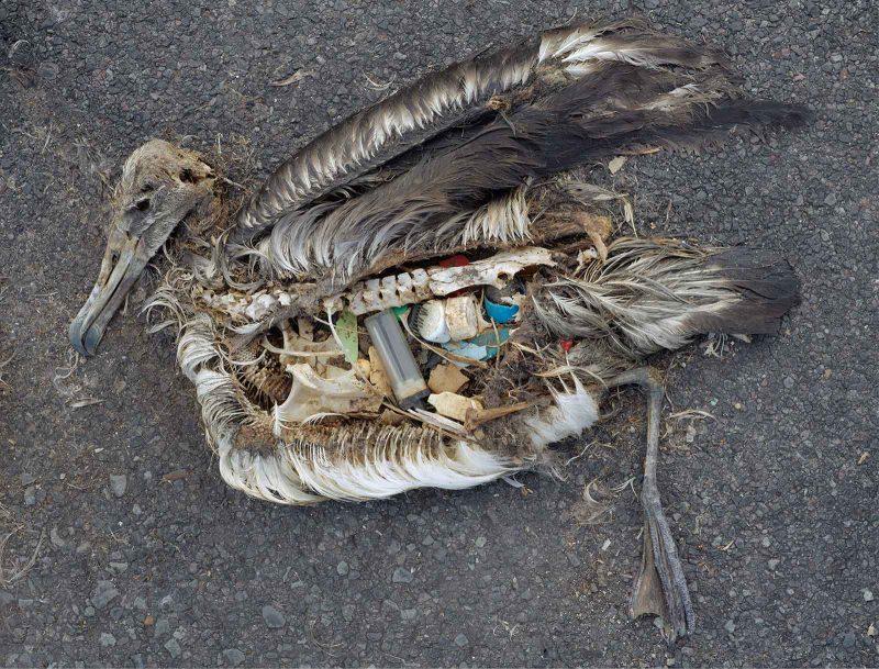 Proyecto Albatross