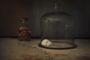 En uno de los cuatro laboratorios del centro, bajo una campana de cristal, hay un ratón blanco perteneciente a una colonia iniciada hace años. Un técnico sigue criando a los roedores por si hicieran falta para investigaciones futuras.