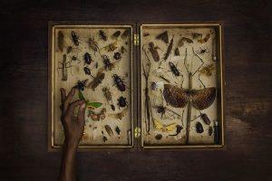 Arbugaeva cuenta que a Mganga le encantaba mostrarle sus recuerdos de Amani: «las cataratas más recónditas y sus lugares favoritos, las casas en las que vivía el personal británico» y esta colección de insectos, que él y el entomólogo Raybould tardaron años en recopilar y analizar.