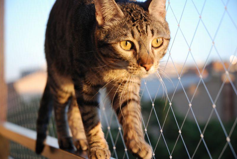 """Nuestro gato """"Nina"""" paseando por la barandilla sin peligro gracias a la red."""