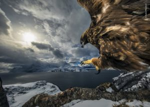 Audun Rikardsen: Land of the Eagle