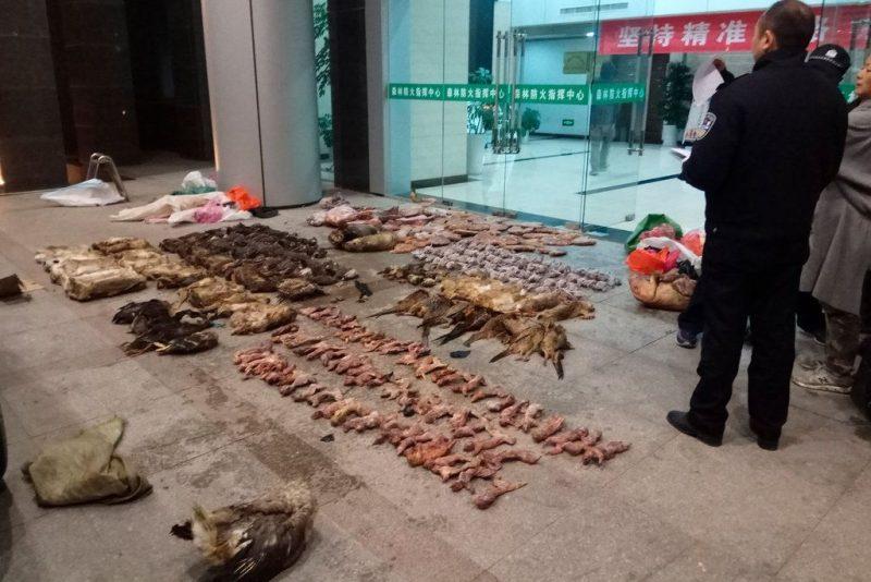 La policía china con artículos confiscados en una tienda sospechosa de tráfico de carnes exóticas en Guangde.