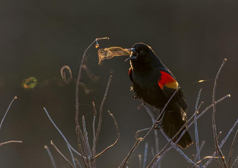 Audubon Photography Awards. Grand Prize Winner: Kathrin Swoboda