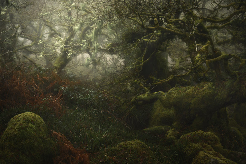 Neil Burnell: Wistman's Wood