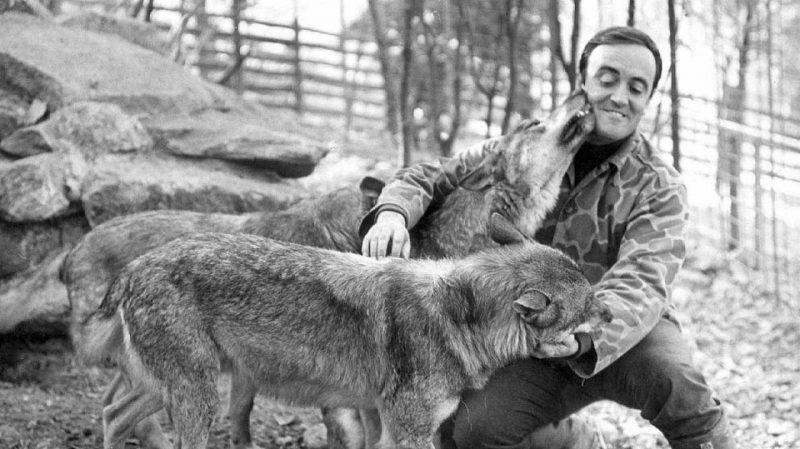 Félix Rodríguez de la Fuente con sus lobos. RTVE