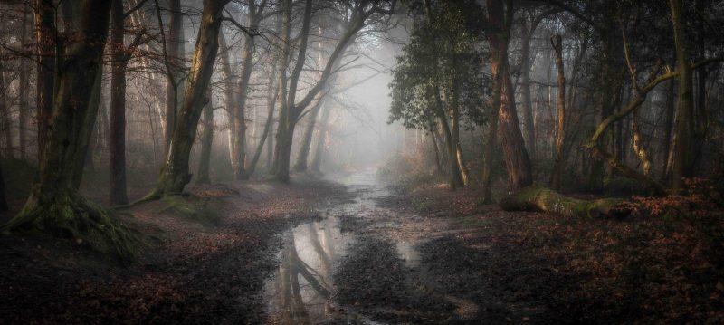 Photographer: © Classic View Winner: Leigh Dorey, 'Roman Road', Dorset