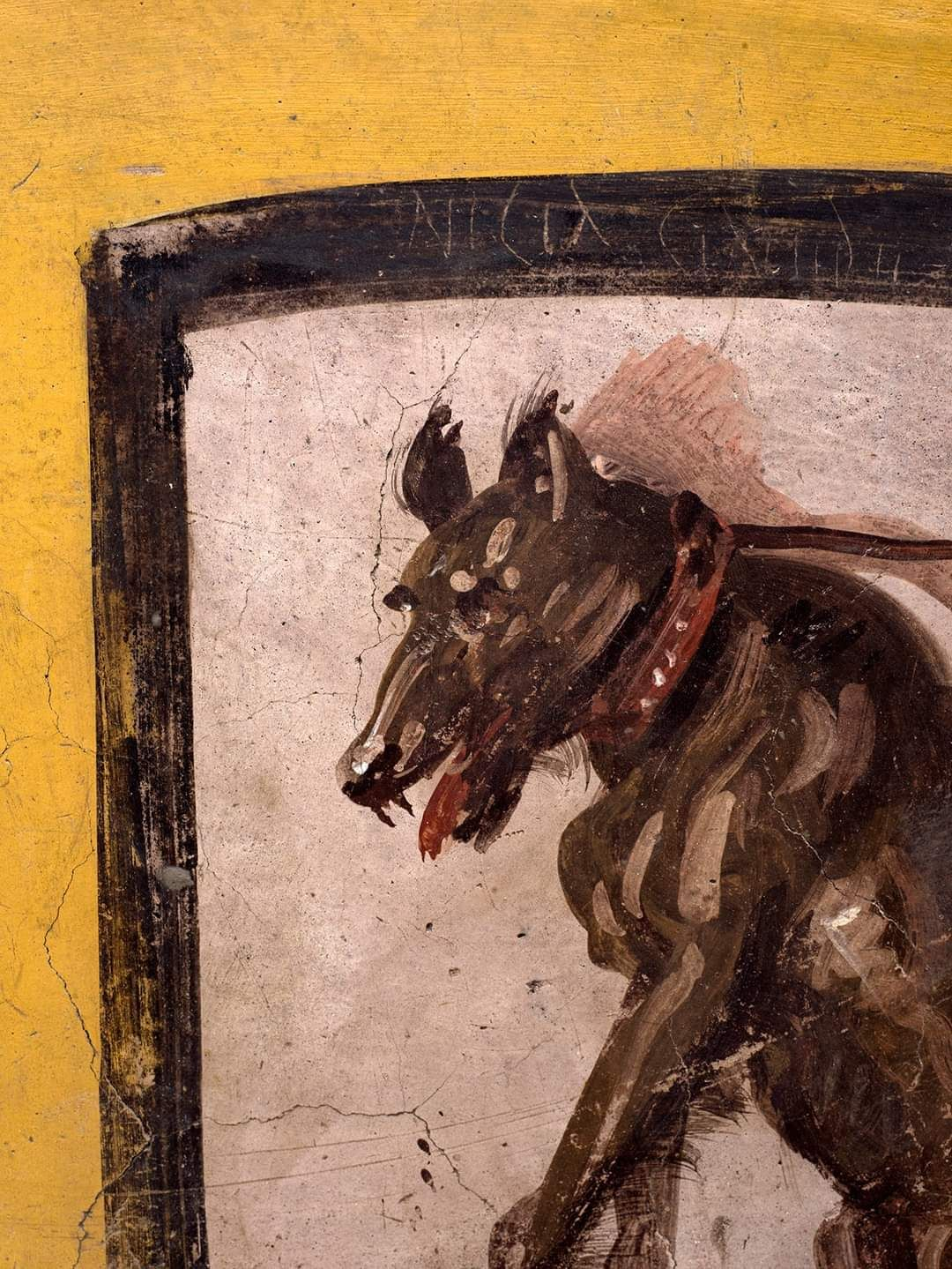 El dibujo de un perro
