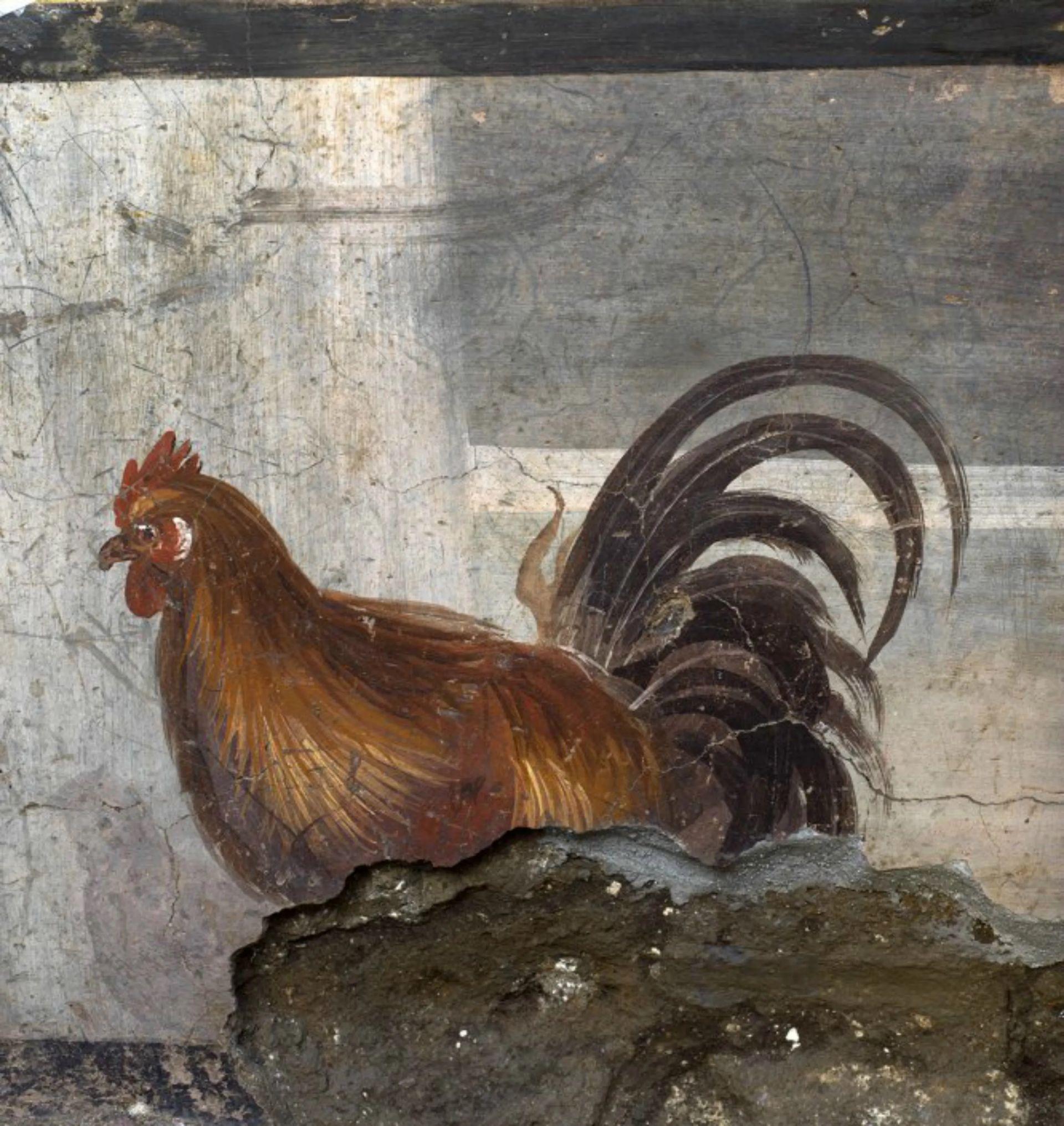 El dibujo de un gallo en el termopolio