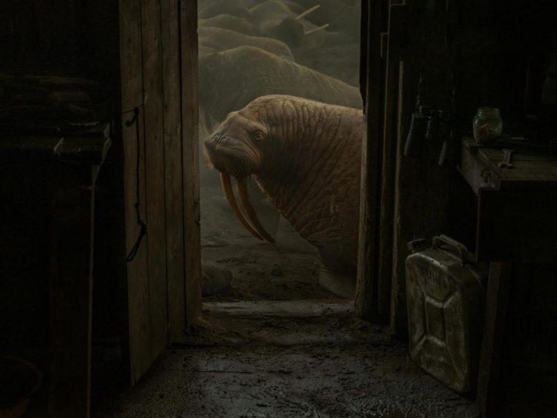 Cuando las morsas nos rodearon, la cabaña se movía —relata Arbugaeva—