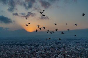 Las palomas vuelan sobre la ciudad de Hatay al anochecer.
