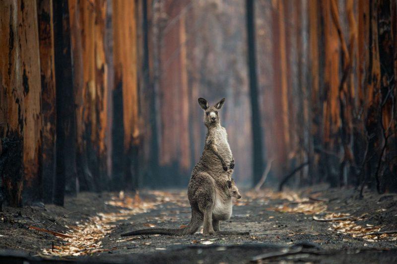 Hope in a Burned Plantation (Mallacoota, Australia)