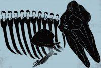 The Big Lie Behind Japanese Whaling