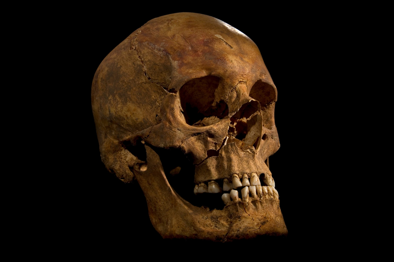 The full skull of the skeleton of Richard III found at the Grey Friars church excavation site in Leicester. Photograph: AFP/Getty Images