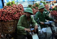 Farmers wait to sell their lychee fruit to local traders last month in Luc Ngan district in Vietnam's northern province of Bac Giang. (Hoang Dinh Nam/Agence France-Presse via Getty Images)