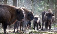 Will no one stop Poland destroying Europe's most precious forest