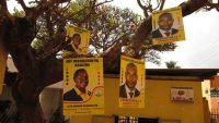 Strange fruit: campaign posters for NRM primaries for local elections adorn a tree, Kampala. CRISIS GROUP/Magnus Taylor