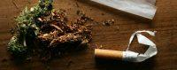 Un «joint» de cannabis en préparation. © KEYSTONE