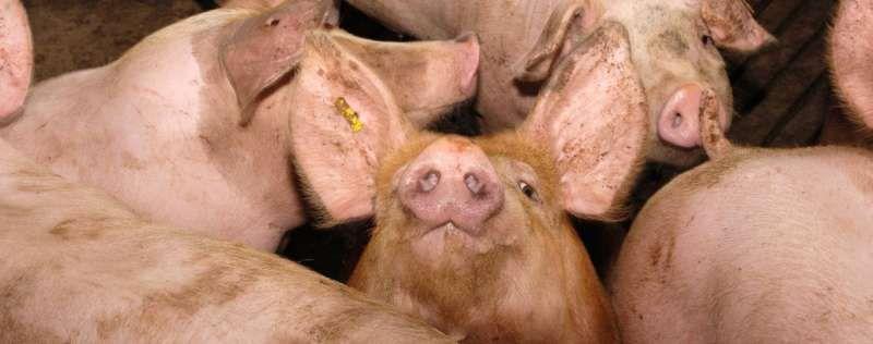 Peut-on mettre fin au génocide animalier