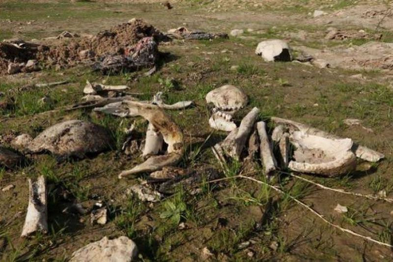 Bones and skulls, suspected to belong to members of Iraq's Yazidi community, are seen in a mass grave on the outskirts of the town of Sinjar, November 30, 2015. REUTERS/Ari Jalal