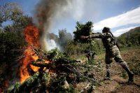 A soldier throwing marijuana onto a bonfire during a military operation at Sierra de Culiacan, Mexico. Credit Bernardo Montoya/Reuters