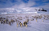 Russia Is Vital to Protecting Antarctica's Ross Sea