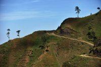 A hillside near Kenscoff, Haiti, showing the effects of deforestation. Hector Retamal/Agence France-Presse — Getty Images