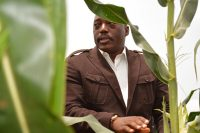 President Joseph Kabila of Congo inspecting corn produced with the help of South African farmers in 2015. Credit John Bompengo/Associated Press