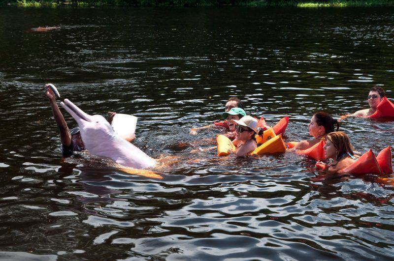 Turistas con un delfín rosado en el Río Amazonas, en Brasil Credit Flavio Varricchio / Fotos de Brasil, vía LightRocket, vía Getty Images