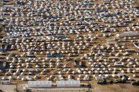 Vista aérea de Zaatari, campo de refugiados en el norte de Jordania, en 2012. Foto: United Nations Photo (CC BY-NC-ND 2.0)