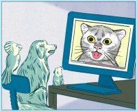 Cómo los gatos se convirtieron en los amos del internet