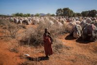 A woman at an internally displaced persons camp on the outskirts of Dinsor, Somalia. Giles Clarke/Getty Images