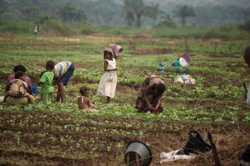 Women and their children, who fled from attacks by rebel groups, work in a field farmed with the help of the Food and Agriculture Organization in Tshikapa in the Kasai Region of Congo on July 27. (Junior D. Kannah/AFP/Getty Images)