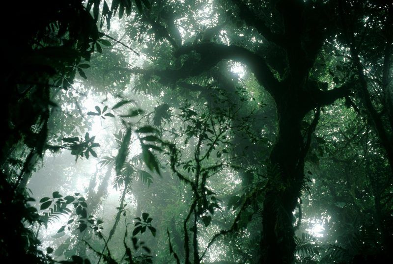 The cloud forest in Monteverde, Costa Rica. Stuart Franklin/Magnum Photos