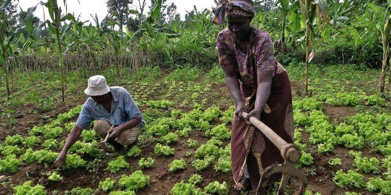La protección de la propiedad de la tierra en África