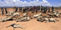 A group of Ethiopians stand nearby rotten carcasses of animals.