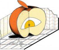 Apple no se puede resistir a China… y a sus leyes antiprivacidad
